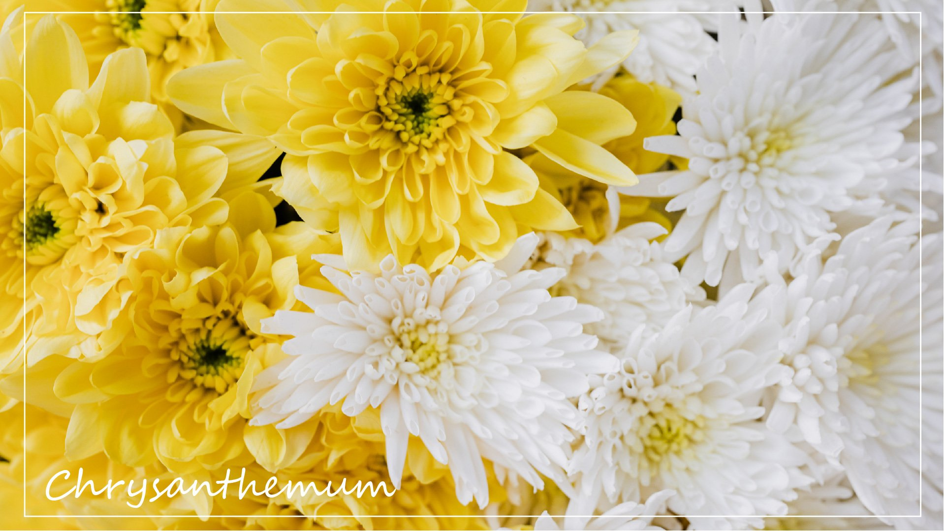浸泡天然食材的浪漫|花草系儀式感,想像沐浴在大自然裡!